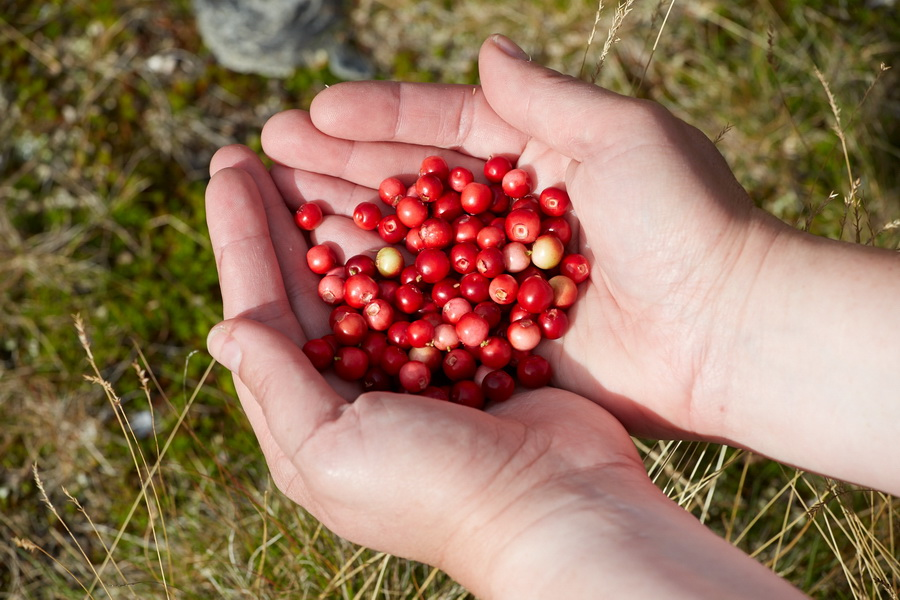 trail cooking with wild berries